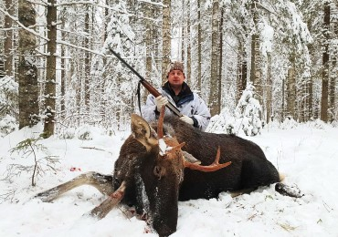 Организация охоты на лося.