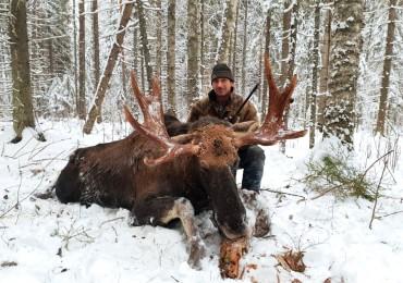 Охота на лося.